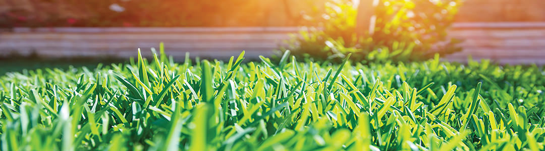 Græsplæne, græsplæner, mos, ukrudt, vertikalskæring