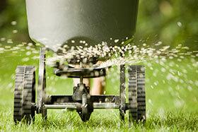 Gødning af græsplæne, gødning af græsplæner, gødning af plæne, plænegødning