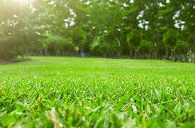 Omlægning af græsplæner, omlægning af græsplæne, ny græsplæne